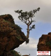 你是别人的一棵树,