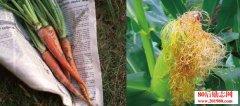 农村种植怎么才能多