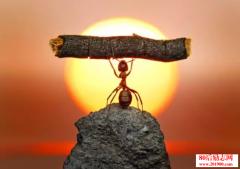 蚂蚁与教授的较量