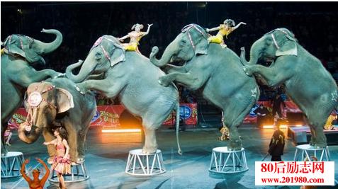 大象的故事:人要突破自我,莫自我设限  8个哲理小故事及感悟