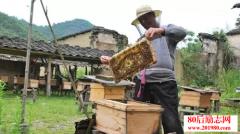 养蜂赚钱的创业故事