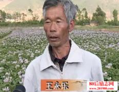 大理鹤庆农民种植蔬