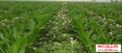 返乡农民工混搭立体种植创业,一亩大棚收入20万!