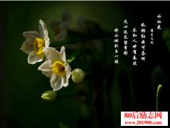 <b>古诗词里的十大名花</b>