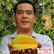 广东清远农民的杨桃