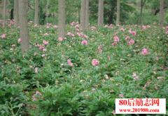 贵州仙山谷药材种植
