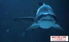鲨鱼的生存之道,励
