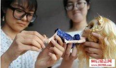 <b>大一女生淘宝店经营换妆洋娃娃,最高月入过万</b>