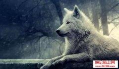 狼和狗的理论,体制