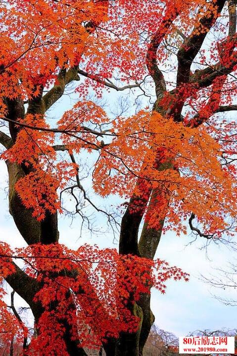 不成大树;我要站成一棵树!