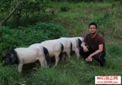 一个养猪场众筹10