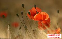 <b>林清玄:生命如花,愿自己的心如花一般绽放</b>