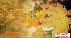 秋天的唯美散文:一片落叶渲染了秋色