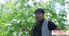 大学生村官种植菇娘
