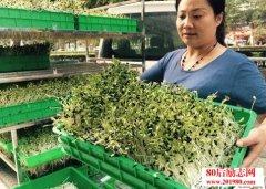 <b>宿迁女强人41岁开始创业,蔬菜种植创业背后的酸甜苦辣</b>