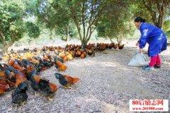 新疆塔城生态开放式