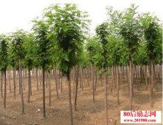 <b>夏季如何提高苗木种植的成活率?</b>