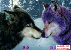<b>《狼王梦》读后感:了解了人性与狼性</b>