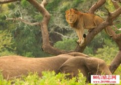 狮子和大象的故事: