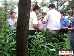 <b>四川内江创业者林下空地种植中药材黄精,带领群众致富</b>