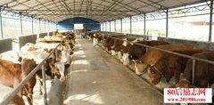 <b>养牛如何节省成本?肉牛养殖省草料的9条秘诀!</b>
