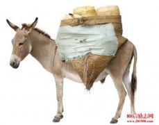 一头驴的故事告诉我
