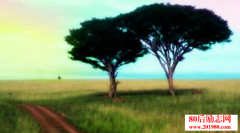 每棵大树都曾是种子