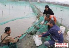 <b>杭州萧山55岁大叔养泥鳅创业,8万元起家豪赚66万!</b>