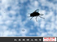 不要做趴在窗户上的苍蝇!