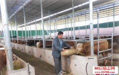 <b>贵州石阡残疾人曹荣肉牛养殖创业,带动残疾人共同致富</b>