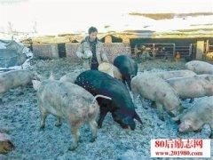 <b>内蒙古大学生猪倌的创业故事:散养笨猪带动群众脱贫致富</b>