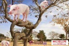 猪上树是什么意思?