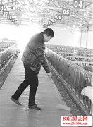 <b>河南退伍老兵农村养殖种植创业,在荒地上带领群众致富</b>