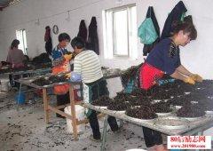 温州紫菜加工创业的故事,从有创业想法到出产品仅60天