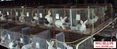 80后农民工养兔创业