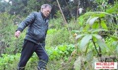 贵州老党员造林护绿