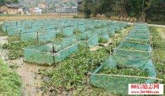 <b>重庆奉节农妇的养殖致富经:养殖黄鳝一年可赚50万</b>