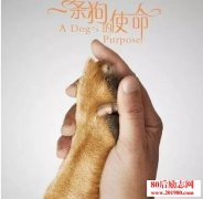 <b>《一条狗的使命》观后感:生活的意义到底是什么</b>