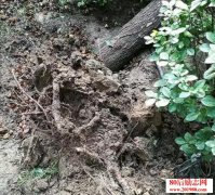 <b>俞敏洪:我要做一棵树,经历狂风暴雨,也不倒下!</b>