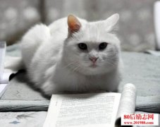 年轻人迷惘的时候多读点书