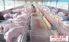 <b>重庆打工女回乡养猪创业致富的励志故事</b>
