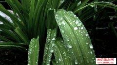 描写雨的句子,关于下雨的经典佳句