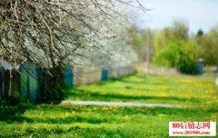 乡村春天的散文:春天,我的心走进乡村