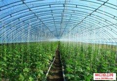 <b>大棚种植种什么菜最赚钱?</b>