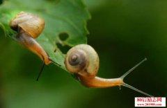 <b>小蜗牛的故事,凡事靠自己!</b>