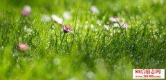 描写春天的词语,关于春天的好词
