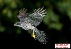 <b>欲为苍鹰,勿与鸟鸣;欲为强者,莫与弱争!</b>