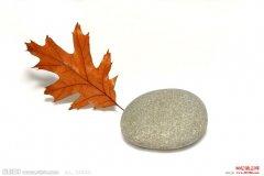 一块石头能卖多少钱