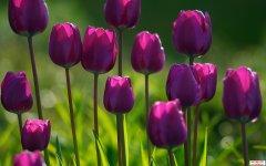 <b>愿在努力的每个春天,都有美丽的蝴蝶轻轻的飞过</b>