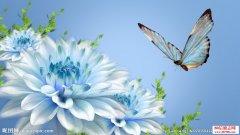 <b>描写花草虫鸟的古诗词绝句</b>